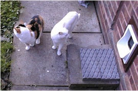 two cats by a cat flap
