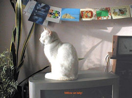cat sitting on a TV